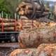 Ministrul Mediului: Luăm în calcul interzicerea exportului de buştean în spaţiul extracomunitar. În UE nu este posibil