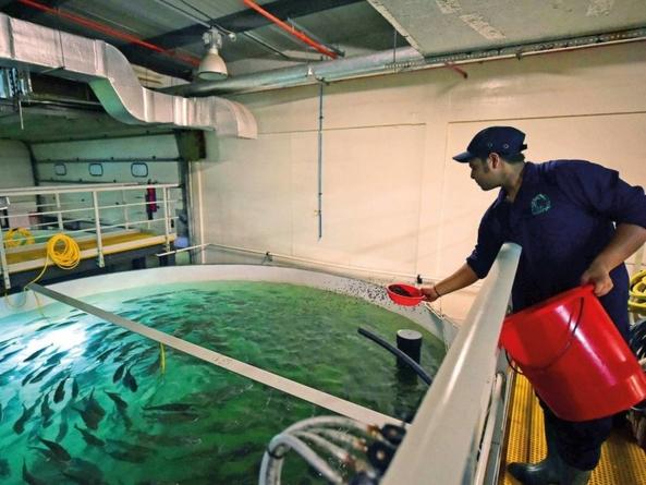 La Dubai mii de somoni înoată în… deșert