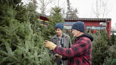 Se apropie goana după pomii de Crăciun. Romsilva a anunțat prețurile din acest an