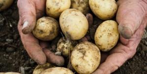 INS: Cartofii s-au scumpit cu 8,74% în luna martie. Este cea mai mare creștere de preț de pe piață