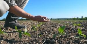 Seceta afectează grav agricultura din România. Probleme majore și în Polonia sau Cehia
