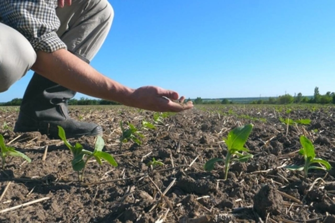 Ministrul Agriculturii: 1,6 milioane de hectare sunt calamitate de secetă. O astfel de situație nu a mai avut loc de 50 – 60 de ani
