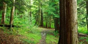 Ministrul Mediului: De astăzi, 40.000 hectare de noi păduri virgine și cvasivirgine din România se află sub protecție strictă